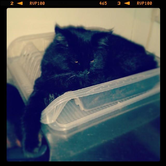 Abwasch erledigt! #er #cat #dave #kitchen